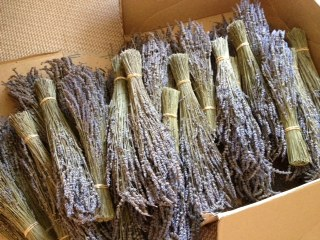 Bunched Dried Lavender