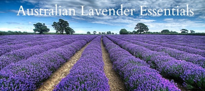 Quality Handmade Lavender Products